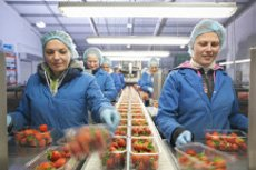 GESTION DE PRODUCTION | Agroalimentaire
